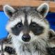 SmokePuddingEveryday's avatar