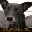 -QuraK-PL