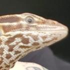 View RedAgera's Profile