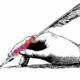 Beaded Quill
