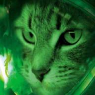 prowlingcat