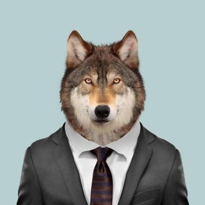 wolfgangyu