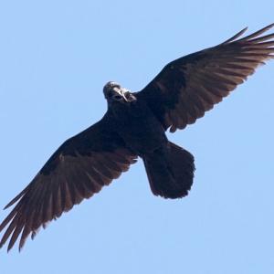 avatar for DavidD59