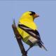 EJH2's avatar