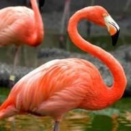 flamingoezz