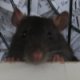 François Bissey's avatar