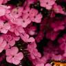 Author: Aleena Jawaid