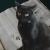 Avatar for Dash Kitten