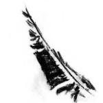 Profile picture of Mantelia