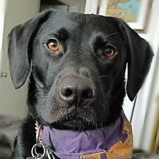Zen Dog Stuff