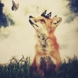 A Fox in the Wires
