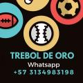 avatar for treboldeoro