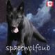 spacewolfcub's avatar