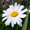 mydaisydaze