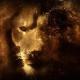 lionhoho