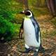 xtof's avatar