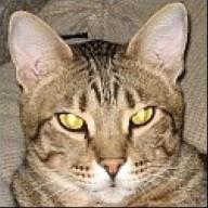 CatsAreGods