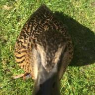 Mr. DOS