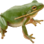 froggylink