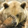 BearPup