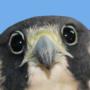 Hawkpath