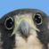 View HawkpathAS's Profile
