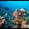 coralreefer