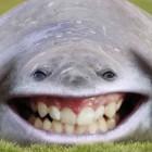 Profile picture of morgan hide