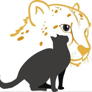 Katzenkompetenz