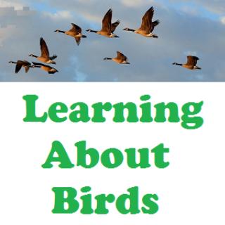 Birds & Babies