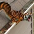 TigerHasGame