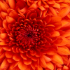 powerflower's Foto