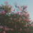 fleur96