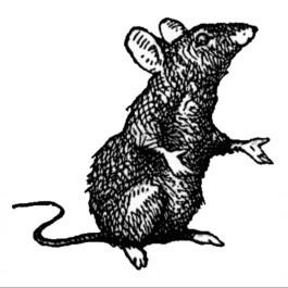 avatar for Goddel M. Robert