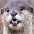 Ranting Otter's Avatar