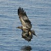 View rivereagles999's Profile