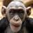 LeLutin's avatar
