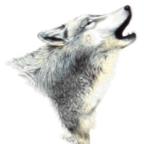 Wolfsfriend42's Avatar