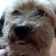 xXBuilderBXx's avatar