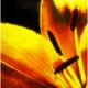 Pr4w's avatar