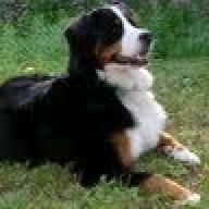 Mountaindog