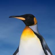 penguinbob