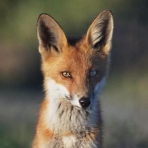 Profile picture for Anna Brix Thomsen