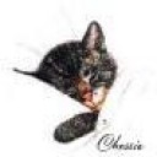 @Chessie