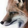 AidenFox