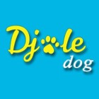 Photo of Djole dog