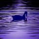 duckpond_wkb