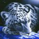 lone_irbis's avatar