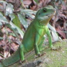 Avatar for grundleborg from gravatar.com