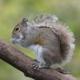 squirrelizer